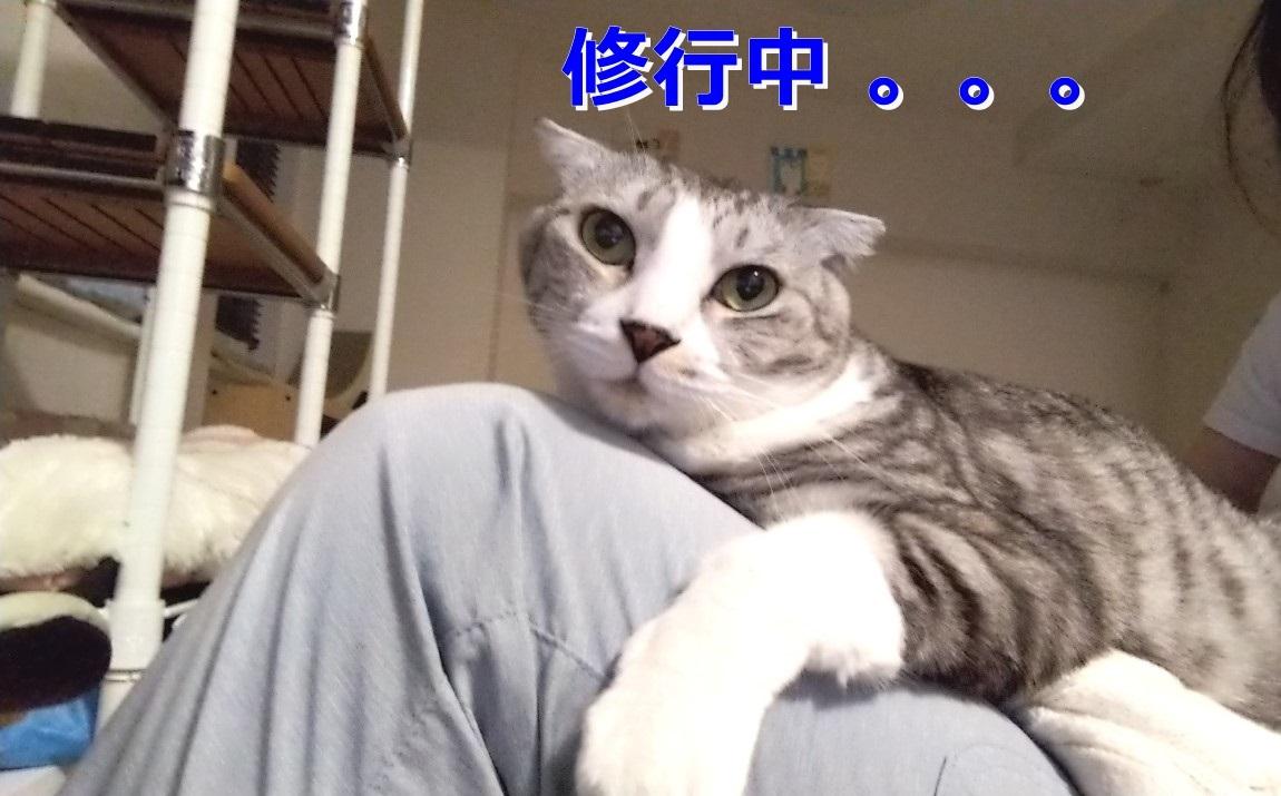 t-IMG_20210513_1901342.jpg