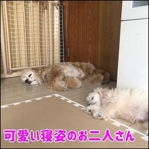 寝姿のお二人さん