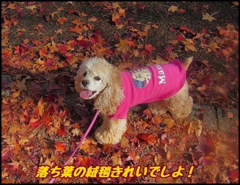 秋でしね~