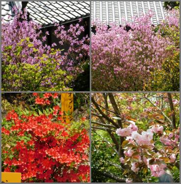 円明院のお花