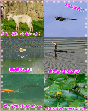 自然がいっぱい
