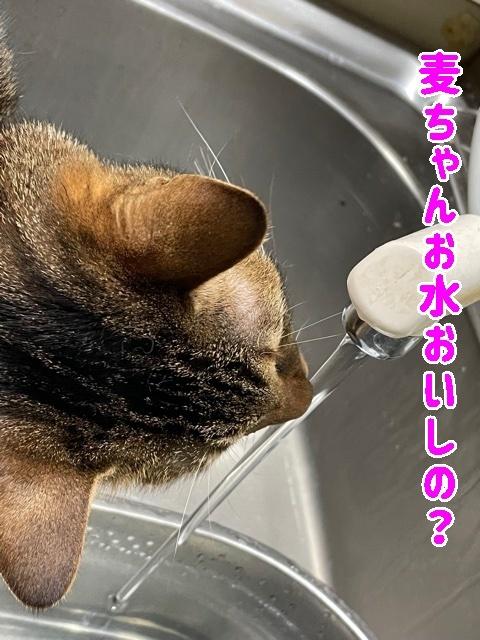 麦ちゃんお水美味し?