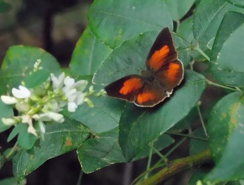 蝶か蛾か!?