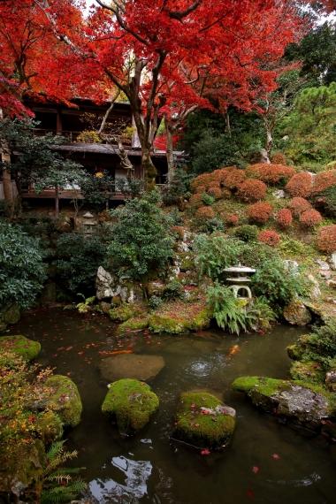 楊谷寺庭園・上書院と紅葉