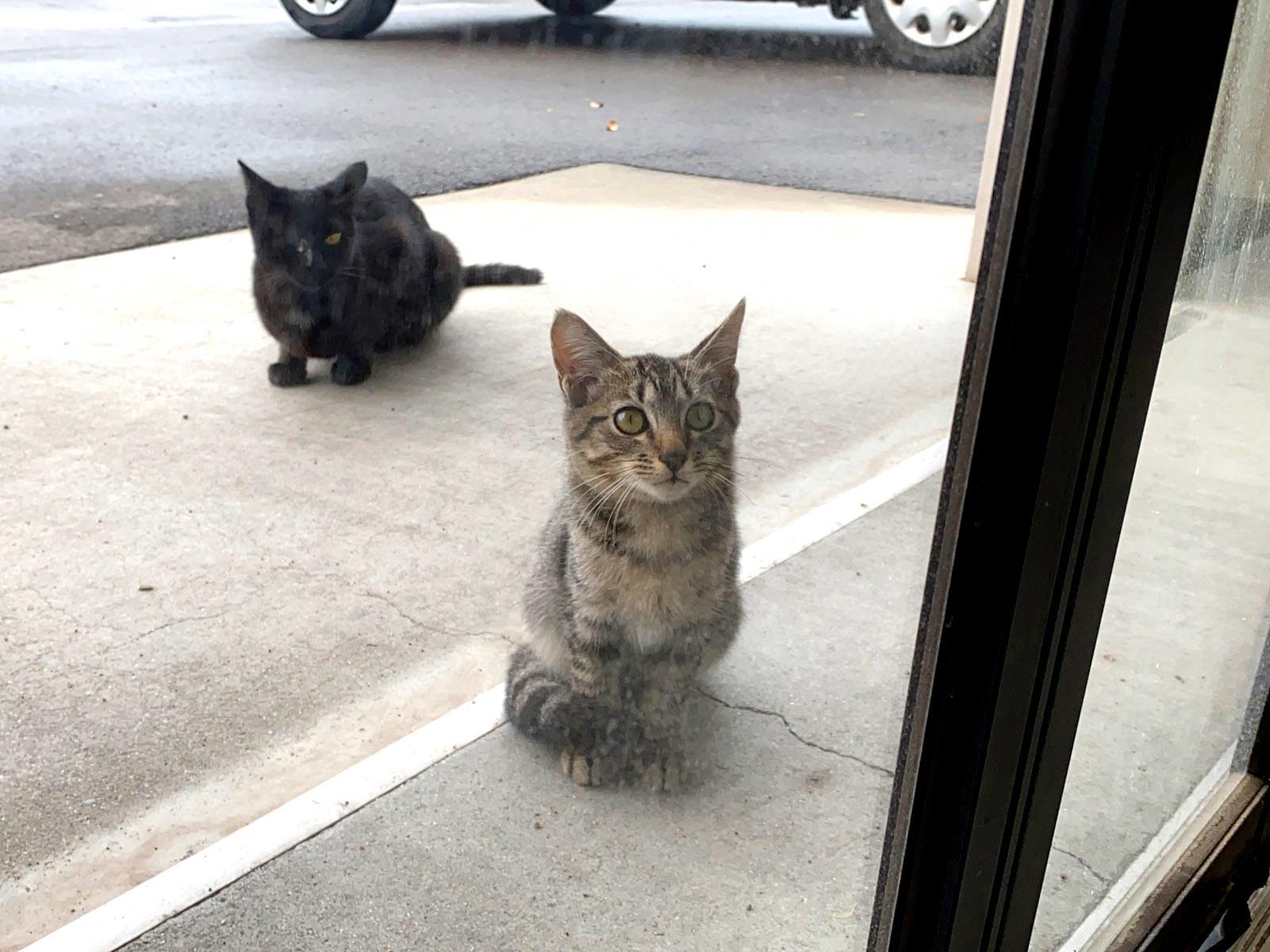 興味津々な子猫