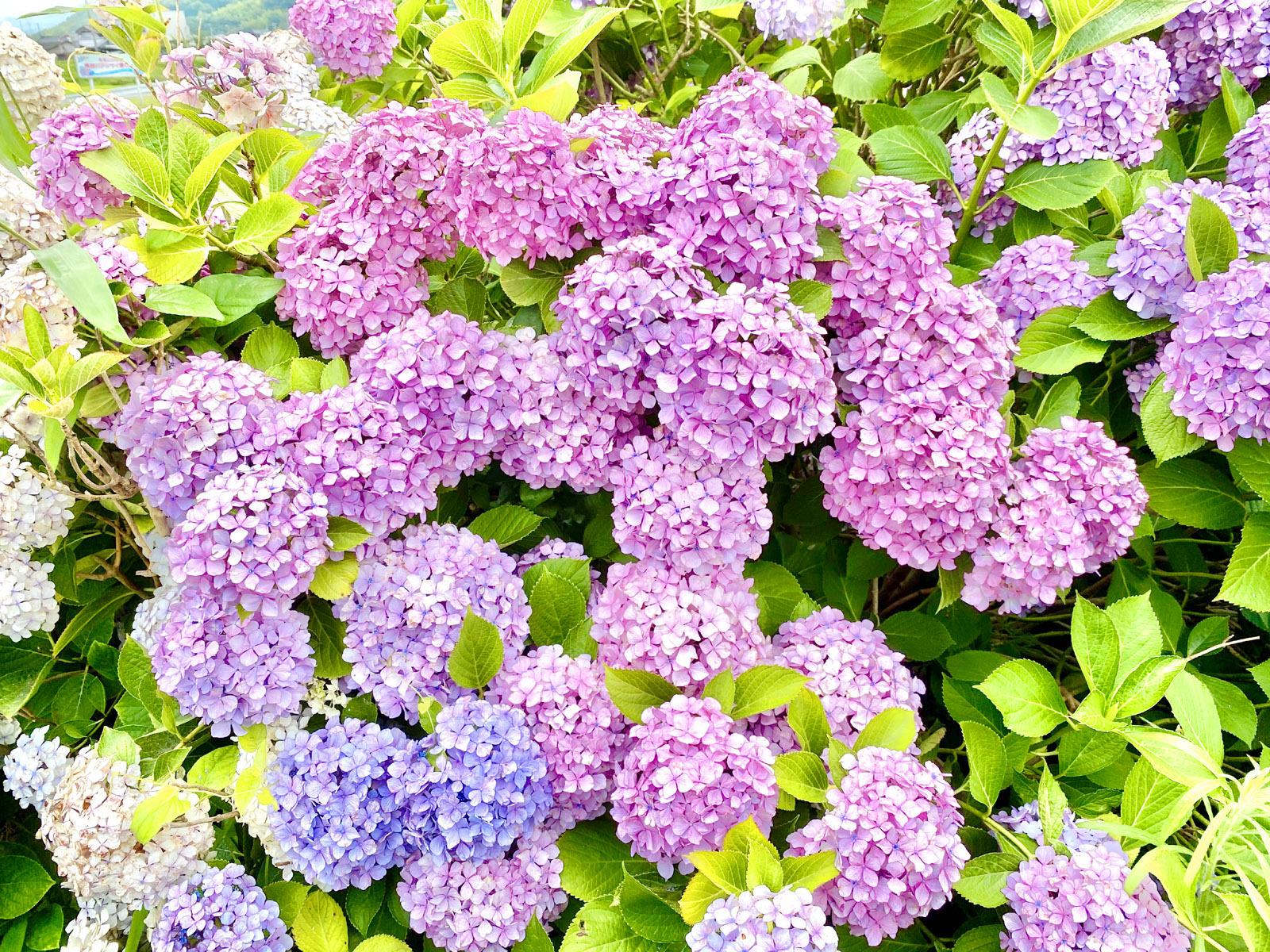 赤紫から青紫のグラデーション
