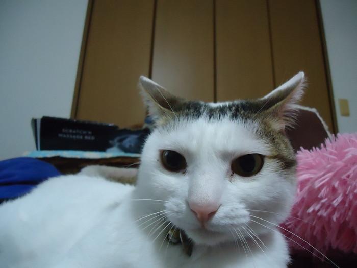 daichi0233.jpg