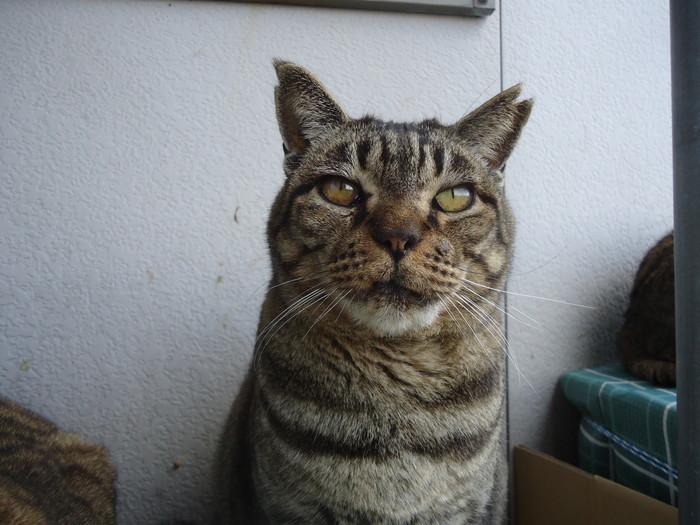 torakichi0195.jpg