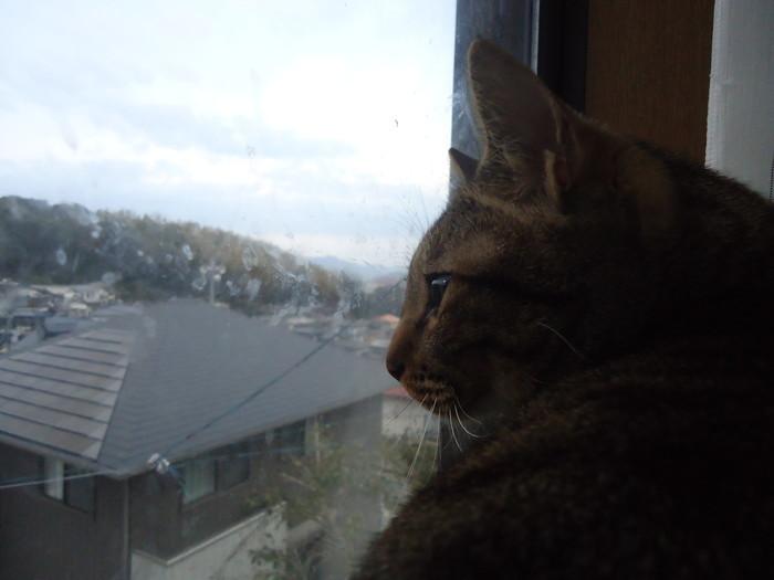 yoshi0078.jpg