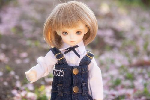 ROSEN LIED、Tuesday's child、通称・火曜子のチェルシー。桜散る野原で、桜と一緒にチェルシーを撮影した、つもり。