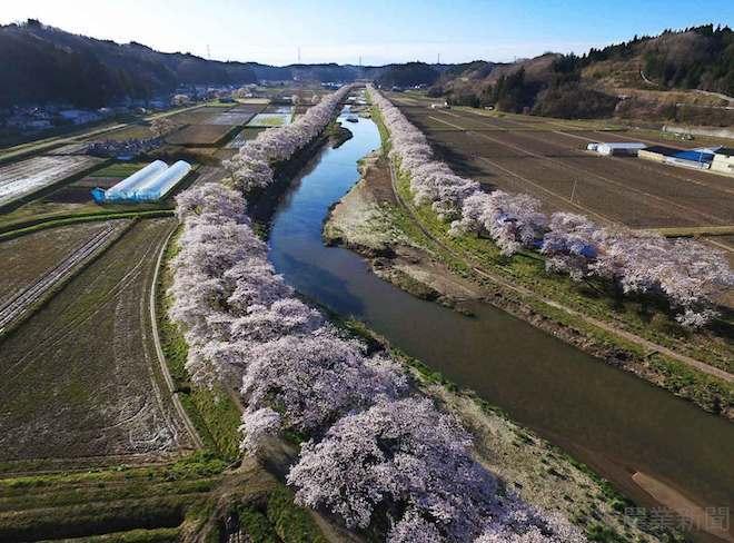 202010325 日本の農家と桜