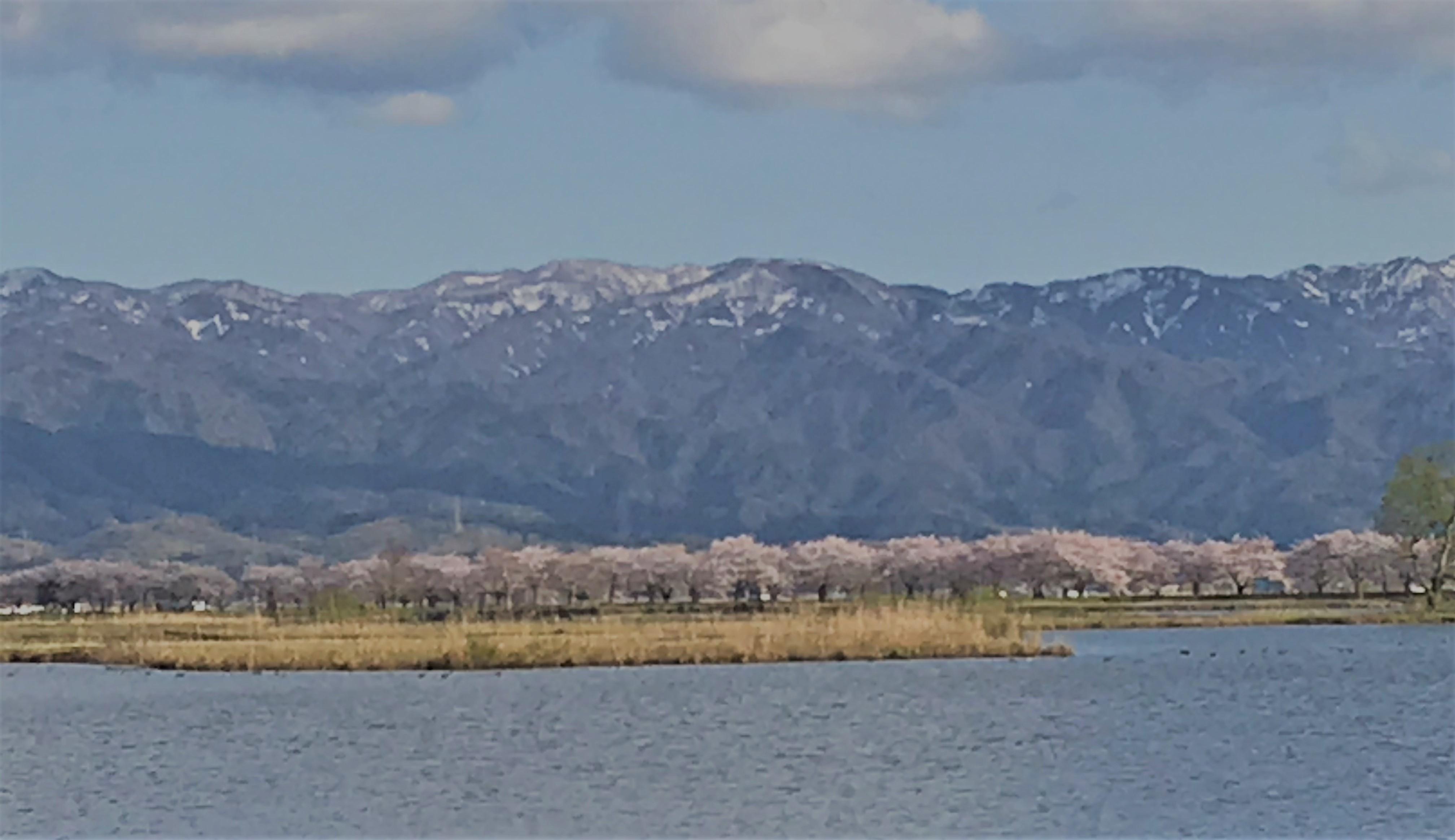 山と桜と潟