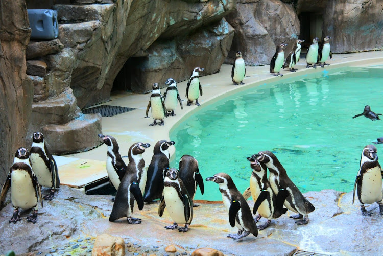 マリンピア日本海ペンギン