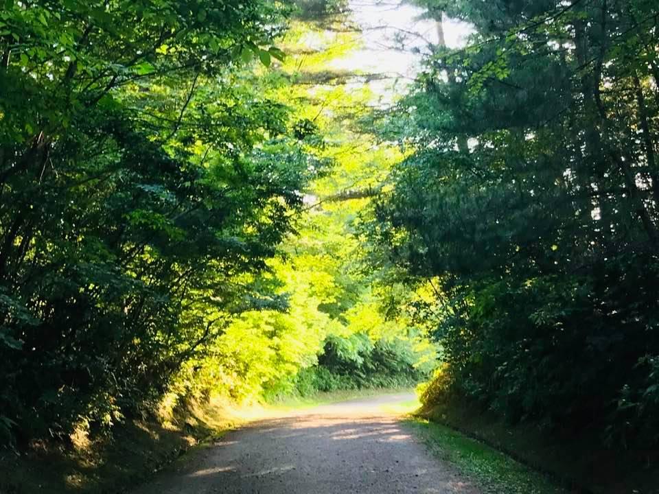 新発田市五十公野公園あやめ園木のトンネル