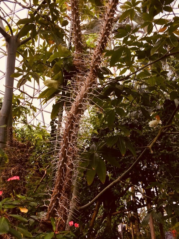 新潟県立植物園のサボテン
