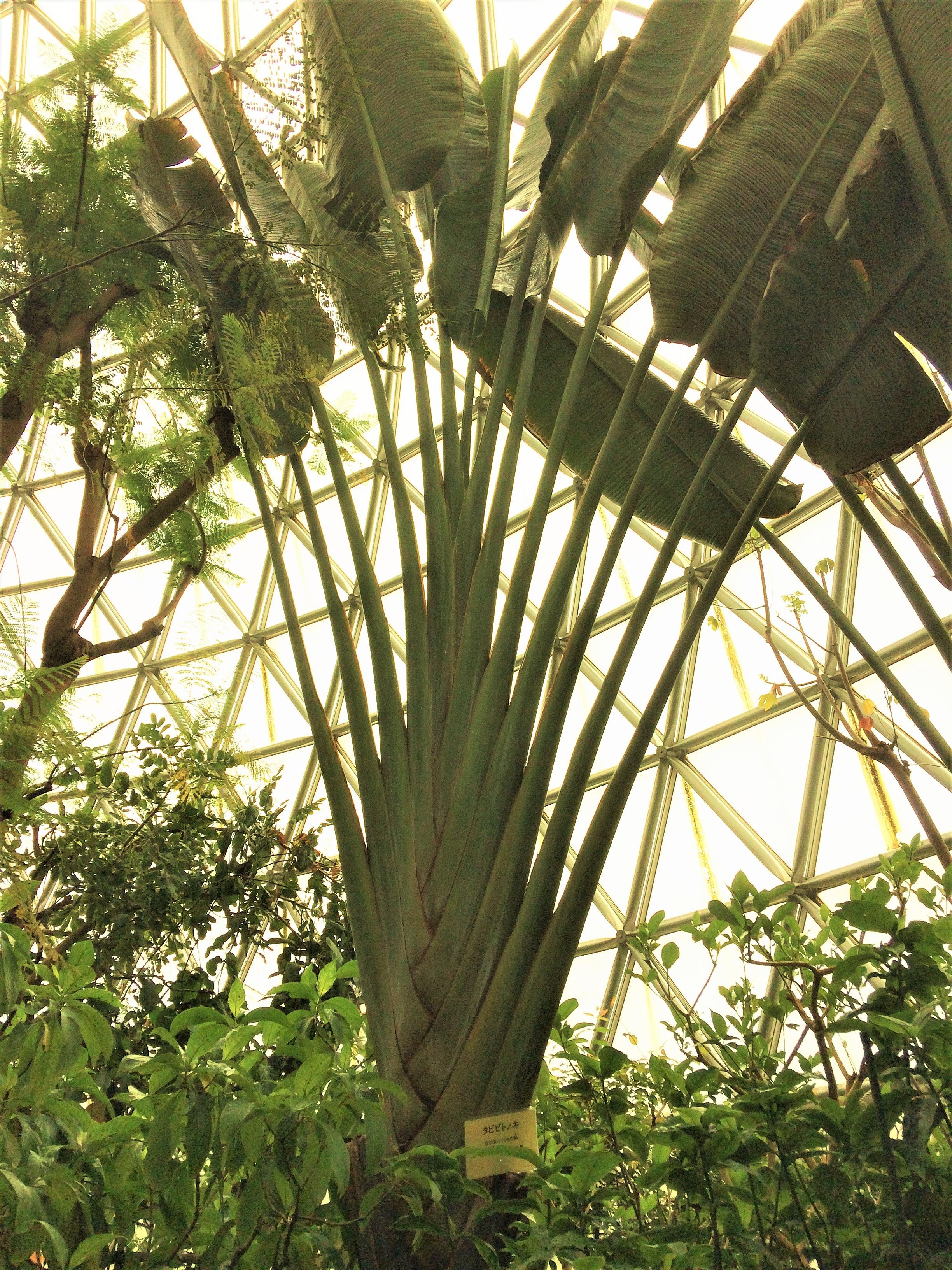 新潟県立植物園温室ドームの植物1