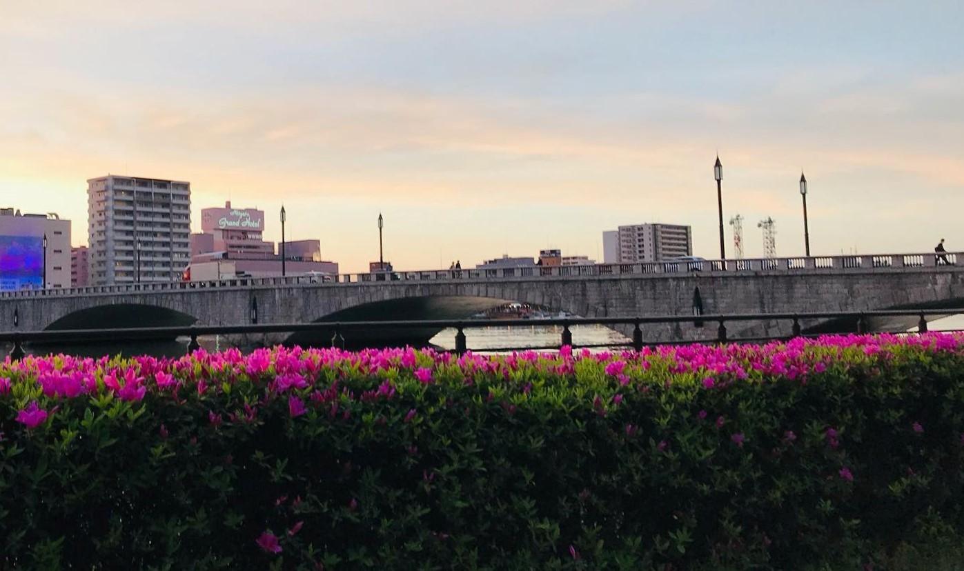 萬代橋とつつじ