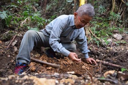 辺野古 埋め立て 土砂 埋葬 パヨク 沖縄 遺骨