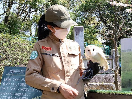 メンフクロウ アイ 徳山動物園