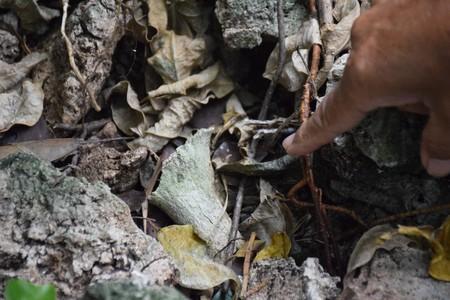 辺野古 埋め立て 土砂 埋葬 パヨク