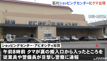 クマ 石川 加賀 アビオシティ加賀