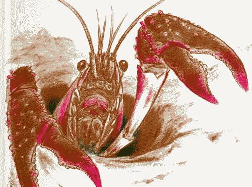 アメリカザリガニ 特定外来生物 アカミミガメ ミドリガメ 環境省