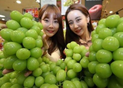 シャインマスカット 種子法 韓国