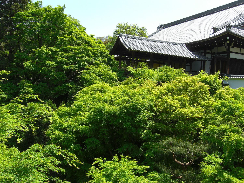 京都市東山区 東福寺 通天橋720100502(20210303)