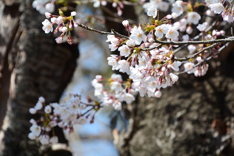 能代市御指南町 日吉神社1620210412
