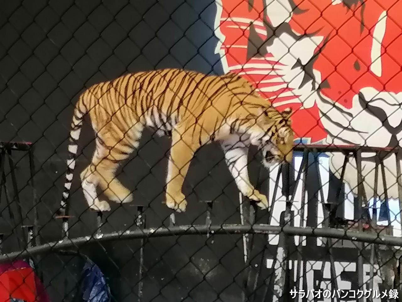 サファリ&アドベンチャーパークは動物のショーが楽しめる動物園 in ホアヒン