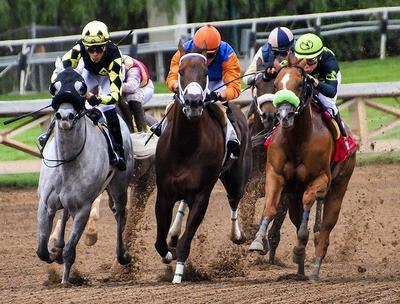 horses-3811270_640.jpg