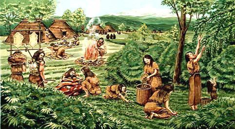 狩猟 収穫