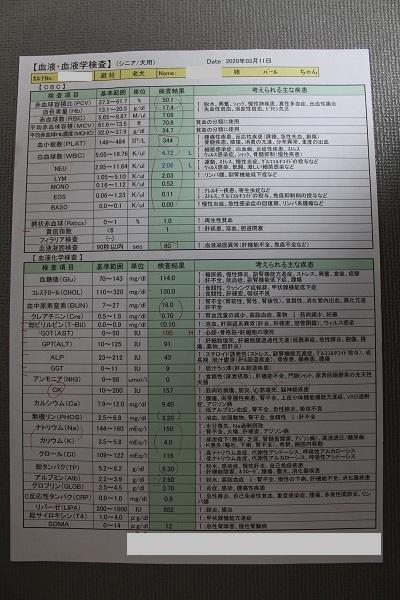 2020.03.16 抜歯+スケーリング-9