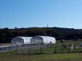 【写真】農園の最南端に建てた育苗ハウス2棟
