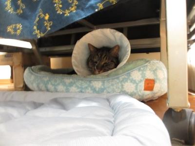 ソファの下のベッドにこもる
