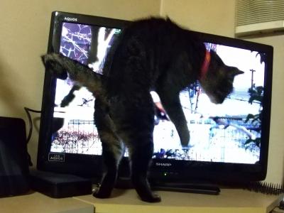 猫動画にエキサイト