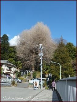 20200316 江戸川橋公園 1  神田川~目白台