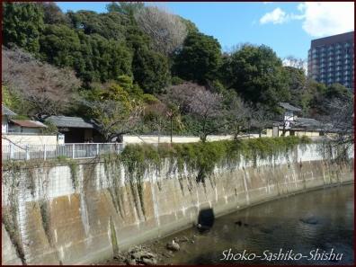 20200316 江戸川橋公園 2  神田川~目白台