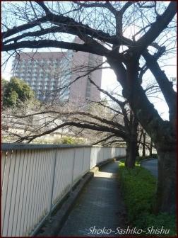 20200316 江戸川橋公園 4  神田川~目白台