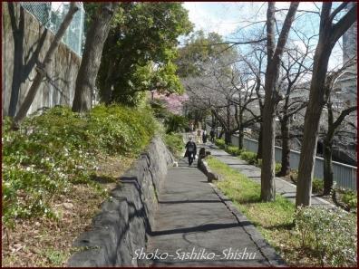 20200316 江戸川橋公園 7  神田川~目白台