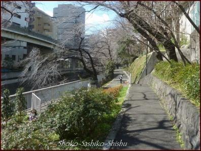 20200316 江戸川橋公園 8  神田川~目白台