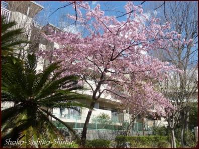 20200316 江戸川橋公園 9  神田川~目白台