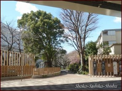 20200316 江戸川橋公園 10  神田川~目白台