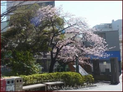 20200316 早稲田 2  神田川~目白台
