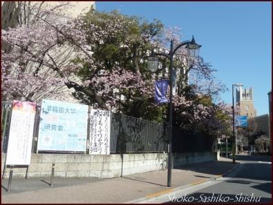20200316 早稲田 3  神田川~目白台