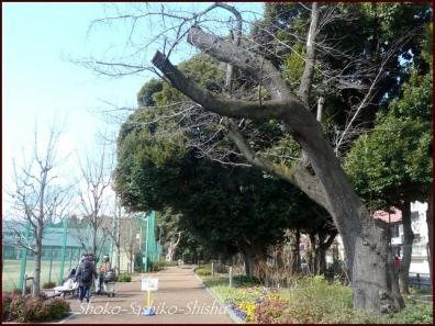 20200316 目白通り 4  神田川~目白台