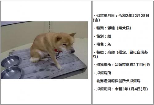 20-12-25老犬