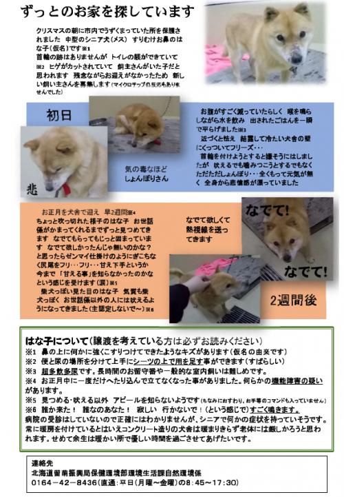 20-12-25老犬02