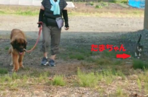 テイアとたまちゃん005
