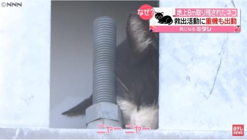 地上8Mの猫